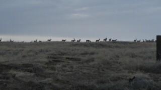 deer-boise-river-wma.jpg