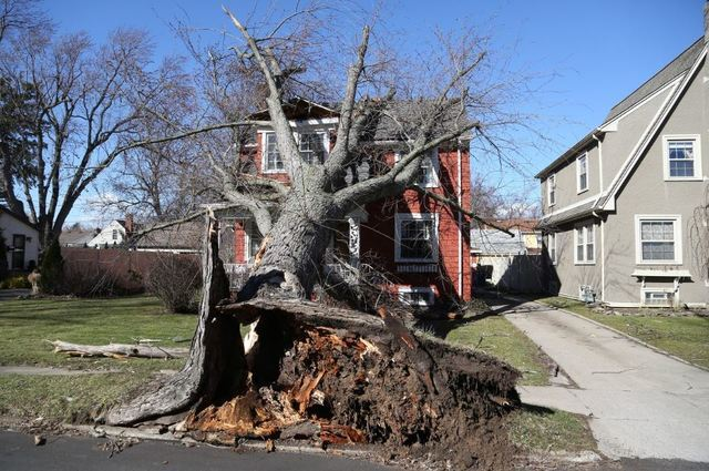 Photo Gallery: Wind damage across WNY