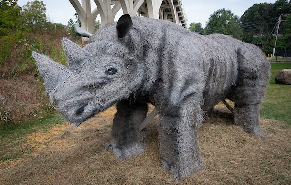 Hay Rhino