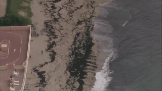 Roughly 150 sea turtle nests in Boca Raton lost during Tropical Storm Isaias
