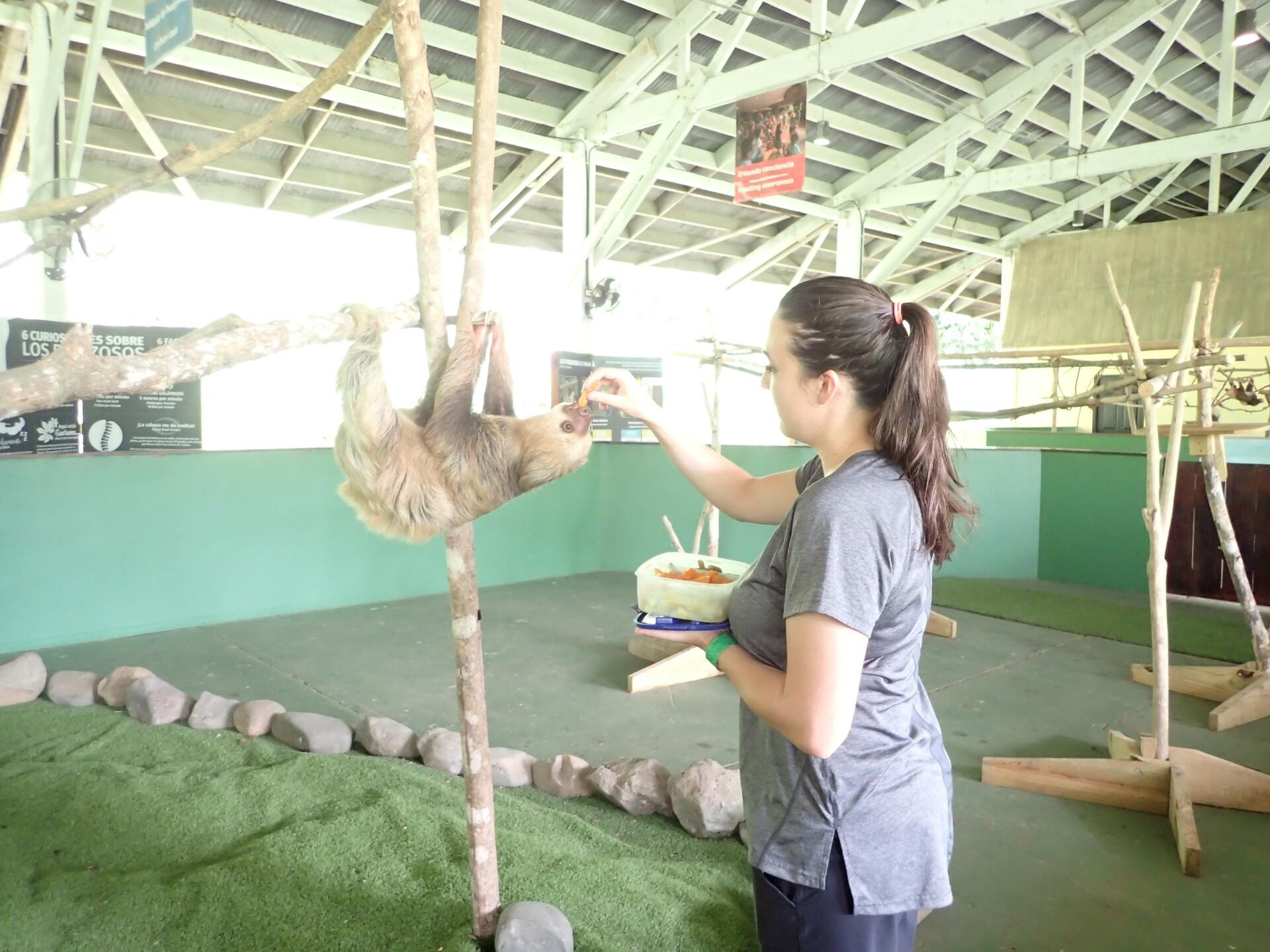Baby Sloths (29).JPG