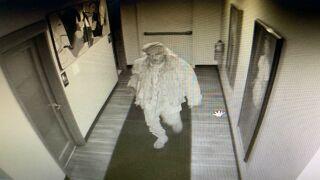 Coquette's suspect.jpg