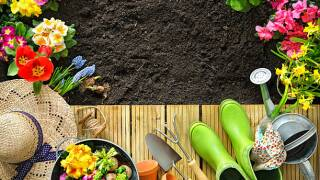 6 Ways to Start Your Spring Garden