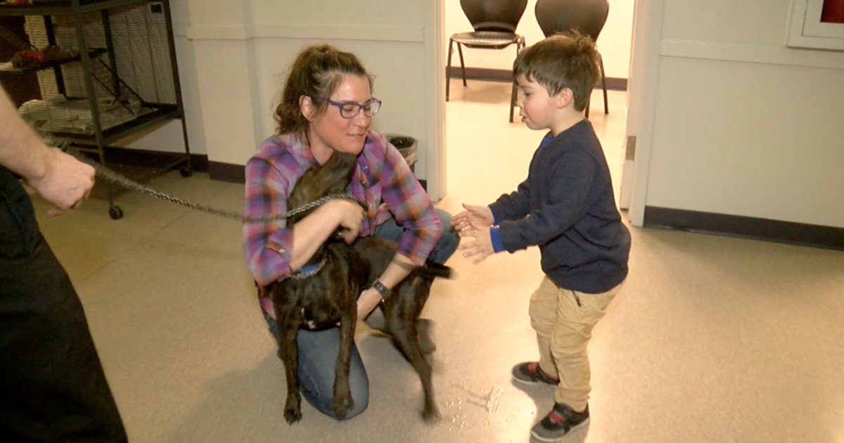 Mother and son reunited with stolen dog