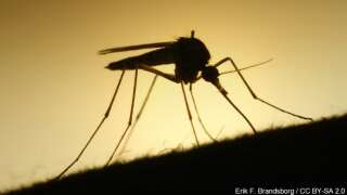Lafayette mosquito pool tests positive for West Nile