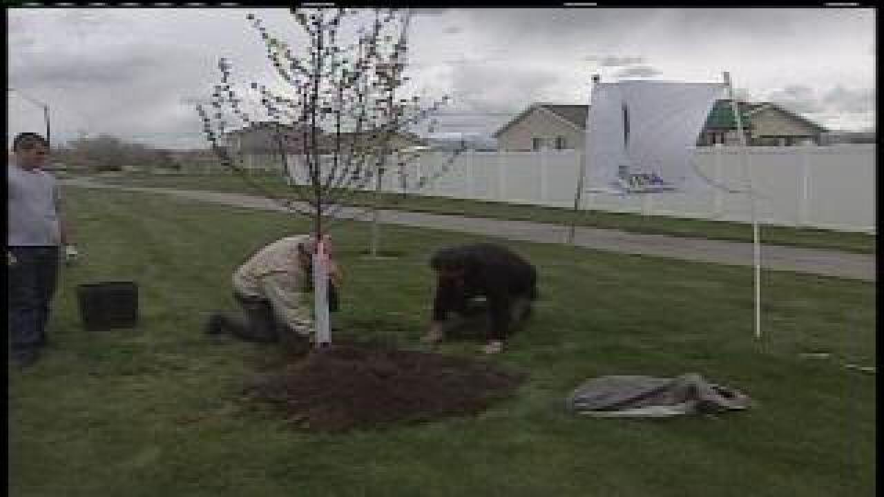 Amy Collins on the TreeUtah planting event