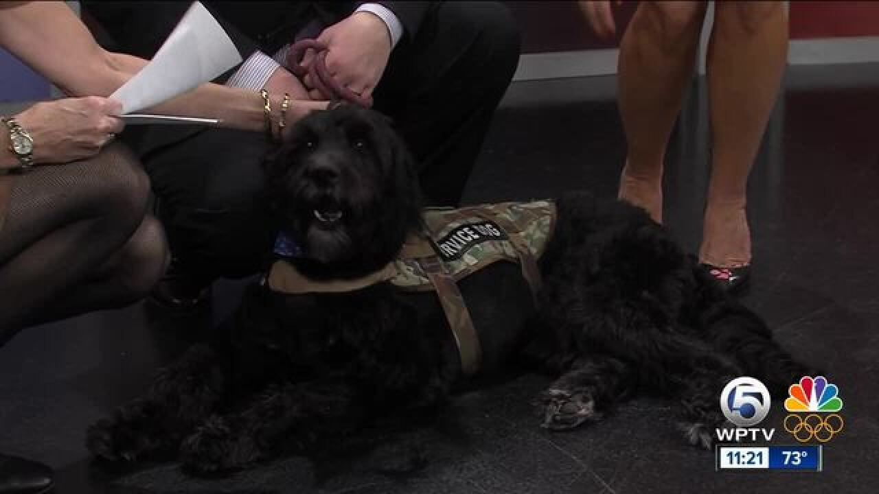 American Humane trains service dogs for veterans