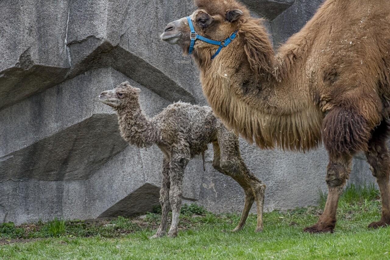 Camel Baby 04-2021-0107016 E.jpg