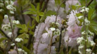 Local florist speaks on Mother's Daypreparations