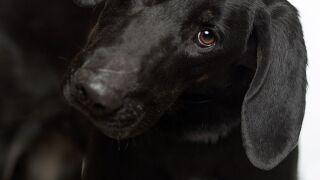 Pet of the week: Rori