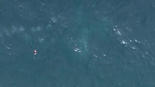 Bird's eye view of small plane that crashed in water off Boynton Beach Inlet, Jan. 25, 2021
