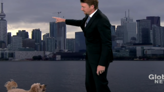 Meteorologist's Dog Makes An Adorable Cameo During Weather Report