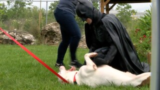 batman-animals-nonprofit-dogs-strays