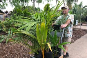 Flowers are in 'Big Bloom' for dollar day at Botanical Gardens