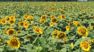 Local farmer builds business on uncommon Indiana crop