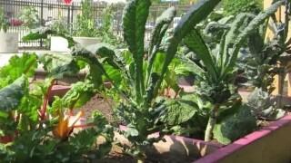 Green Bay Garden Blitz looking for volunteers
