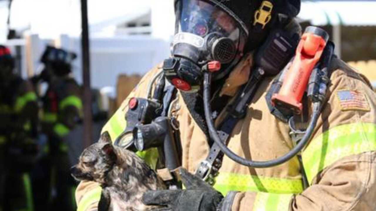 Firefighters rescue dogs from house fire