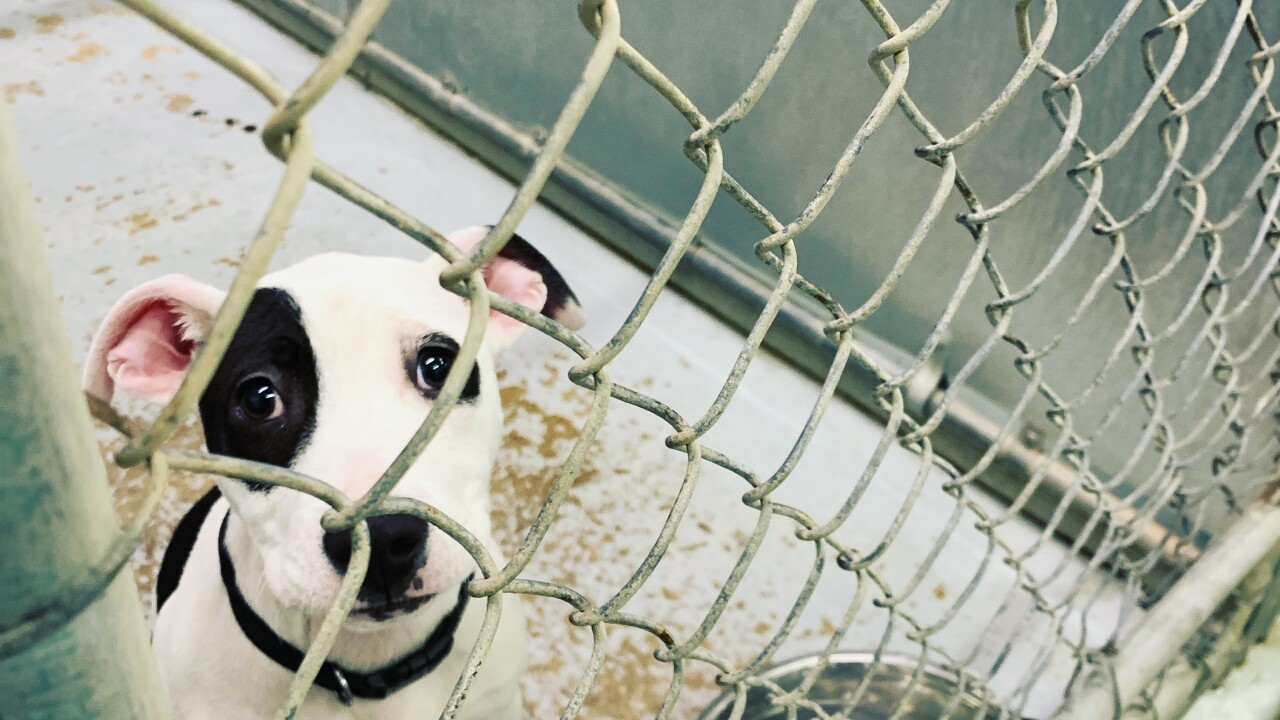 Lorain County Dog Kennel.JPG