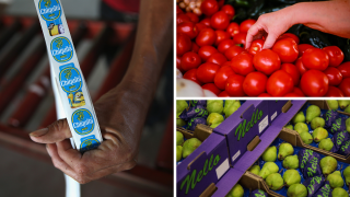 Chiquita Brands International, Tomatoes and Pears