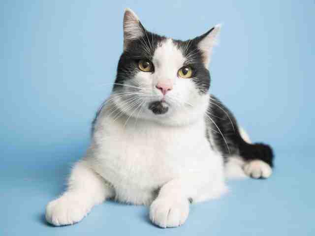Adoptable pets from Arizona Humane Society and Maricopa County Animal Care (4/4)