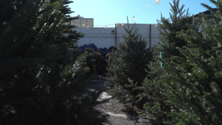 Christmas tree at R.I. Statehouse stirs controversy