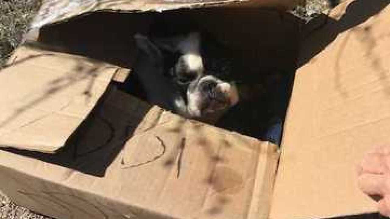 Dog left for dead in a box on Catalina Hwy