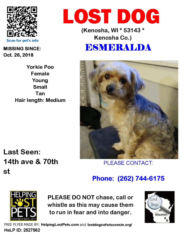 1026 Esmeralda Yorkie Poo Young.png