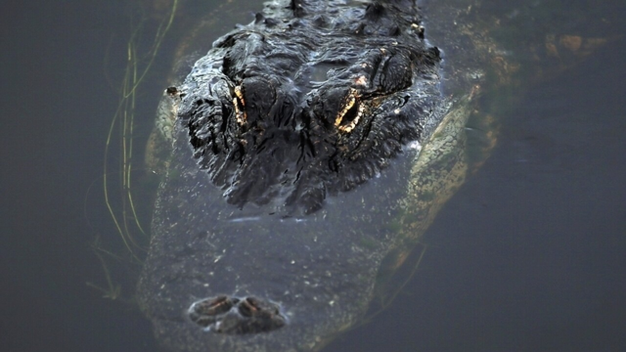 Fatal alligator attacks in Florida over the past 20 years