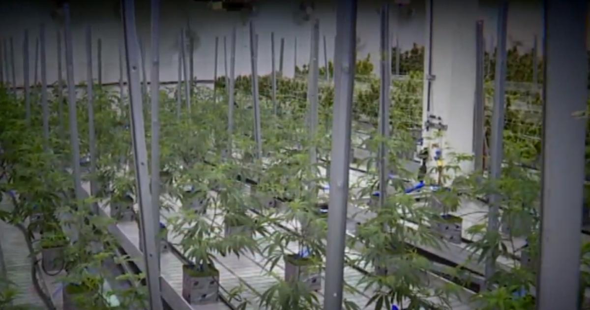 Baby boomers becoming fastest-growing marijuana customer base