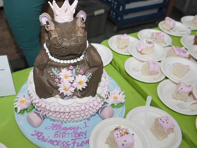 GALLERY: Cincinnati Zoo celebrates baby hippo Fiona's birthday