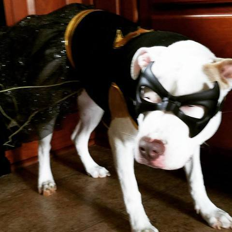 PHOTOS: Your pets dressed up for 'National Dress Up Your Pet Day'