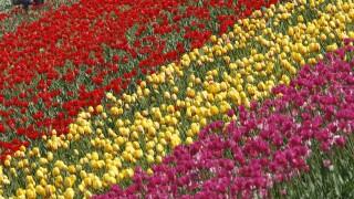 Gardening helping grow more positive mental health
