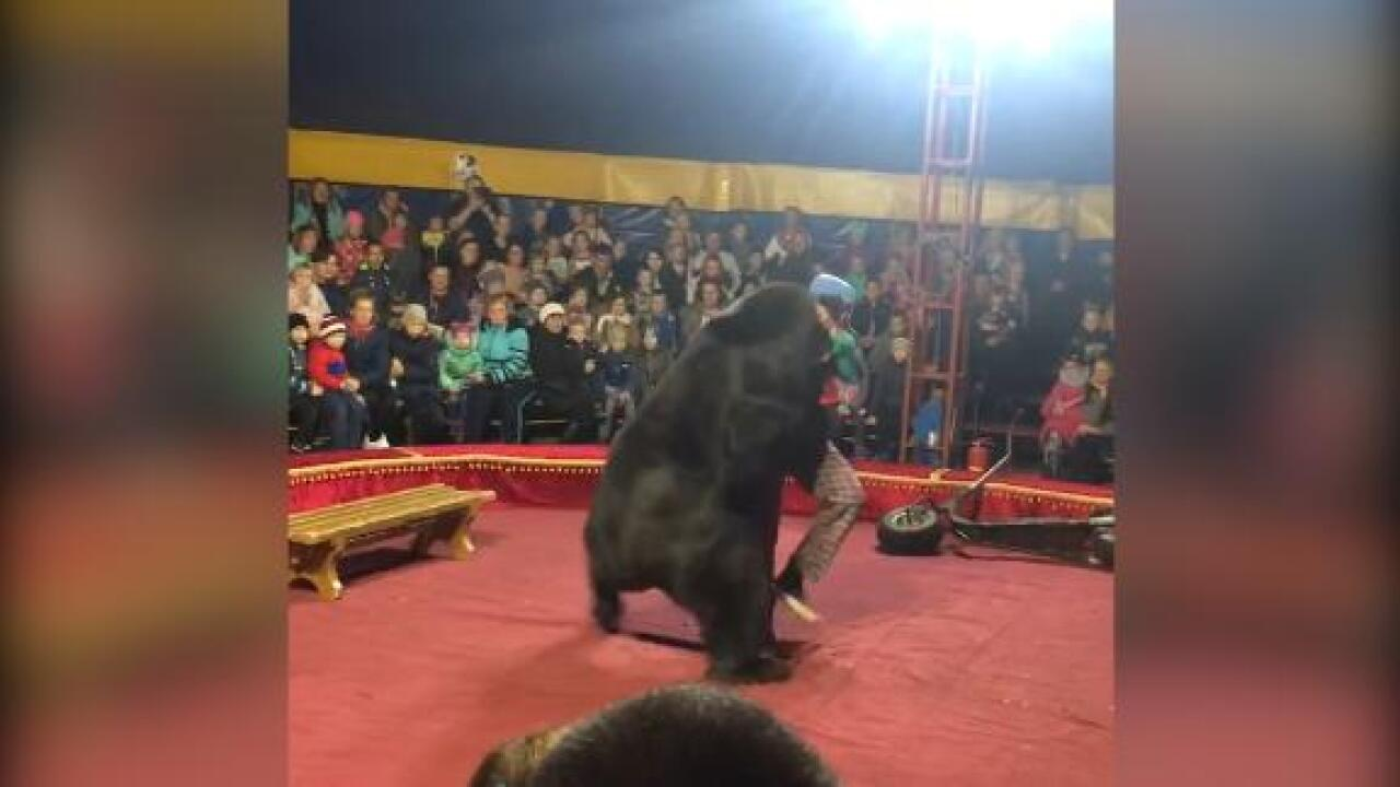 Circus bear attacks his handler in front of horrified families in Russia