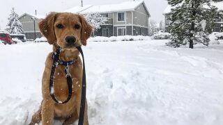 PHOTOS: Snow returns to Colorado!