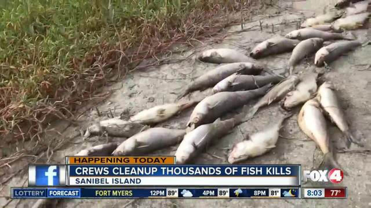 Crews haul out thousands of dead fish on Sanibel