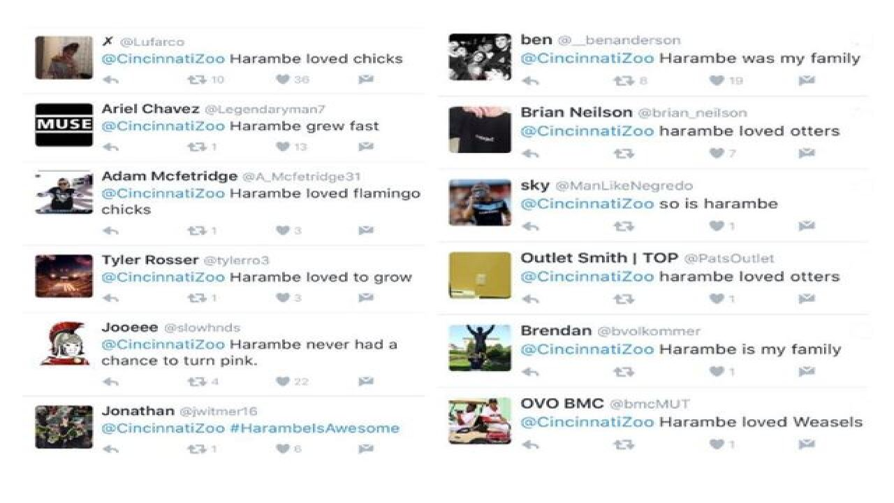 Cincinnati Zoo deletes Twitter account amid floods of Harambe spam