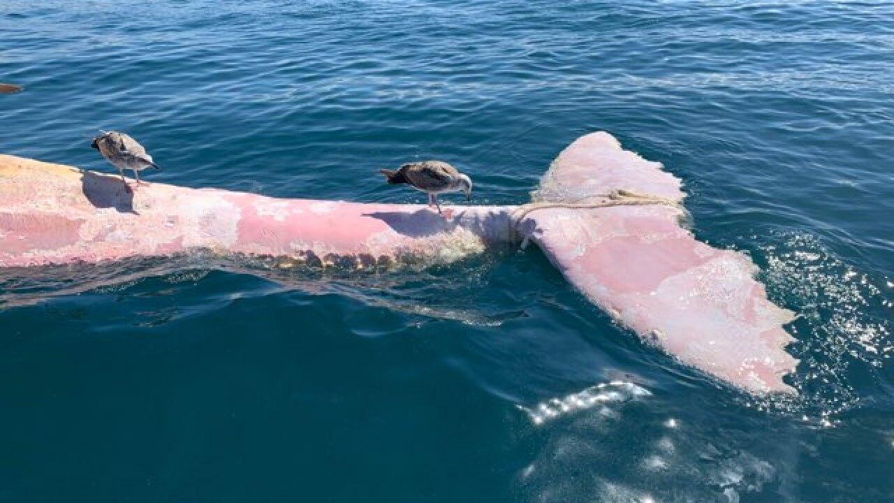 dead whale balcks beach_2.jpg