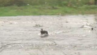 LDWF: Be mindful of displaced wildlife during Morganza Spillway opening event