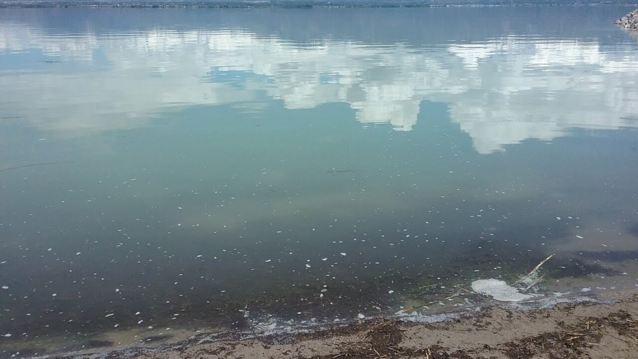 Algal bloom confirmed in Utah Lake near Saratoga Springs