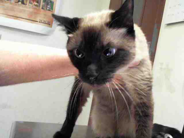 Adoptable pets from Maricopa County Animal Care and Control and Arizona Humane Society (8/16)