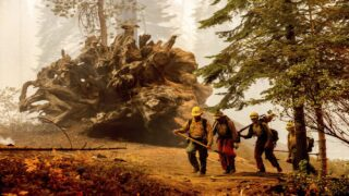 Firefighters Wrap World's Largest Tree In Protective Blankets Amid Wildfires