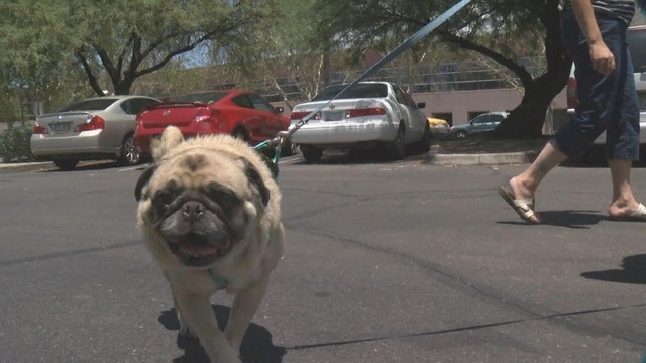 Hug a Pug holding second annual fundraiser