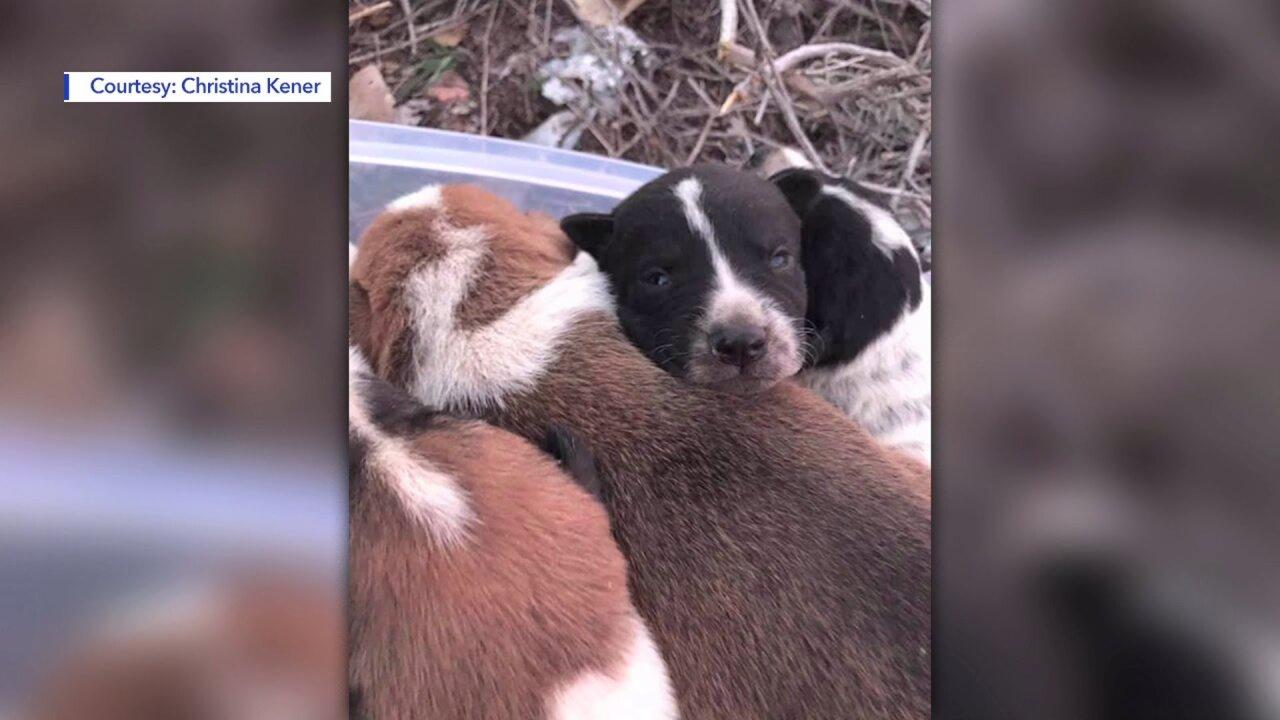 Utah couple rescues newborn puppies from 100-foot culvert off ruralhighway
