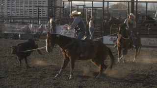 Bobcats men and women dominate Montana State Rodeo short go