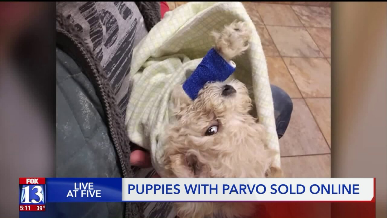 Utah owners accuse breeder of trafficking, after puppies bought online diagnosed with Parvo