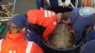 Photos: Coast Guard, N.C. Aquarium release 14 rehabilitated turtles off Cape Henrycoast
