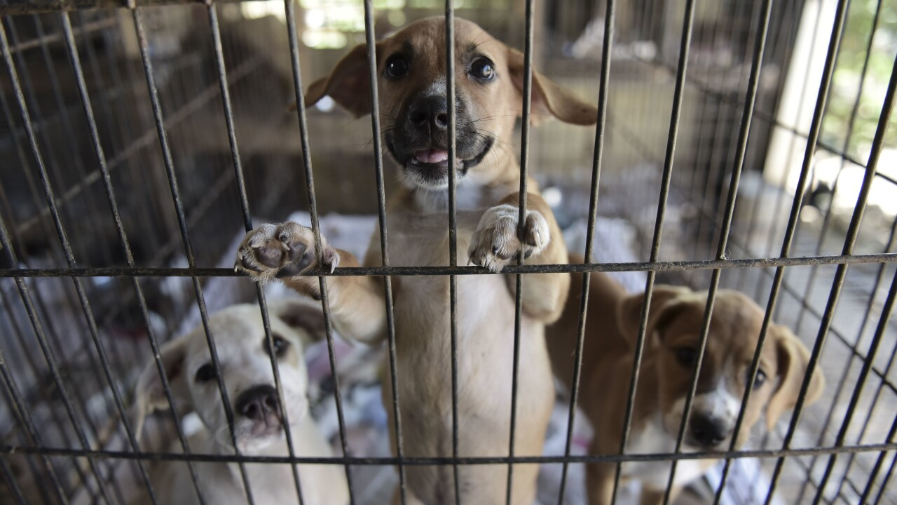 Senate unanimously passes PACT Act, which would make animal cruelty a federal felony
