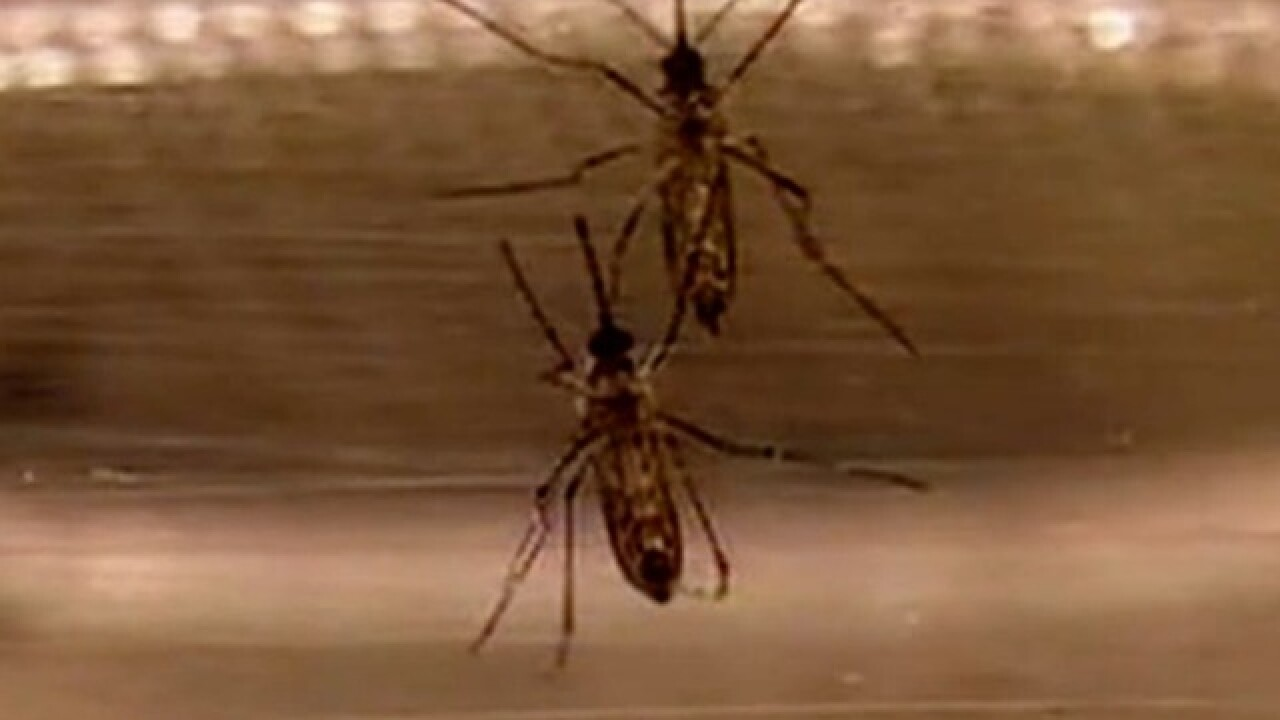Fight the bugs: Summer rains bring mosquitoes