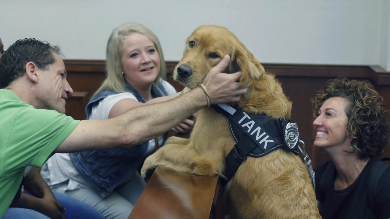 Tank Summit County drug court service dog