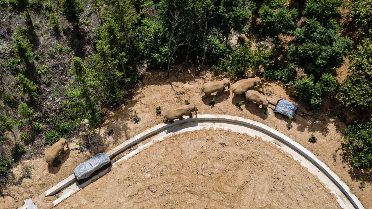 China Wandering Elephants